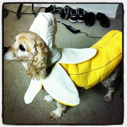 banana ccs