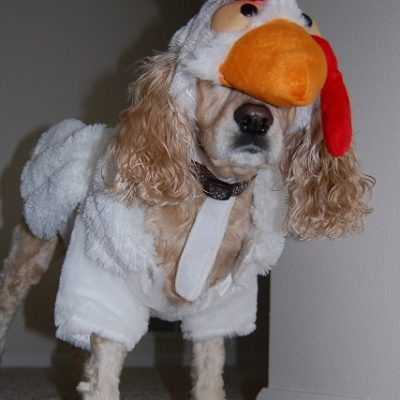 Fur Baby Friday….Revenge of the Chickens…