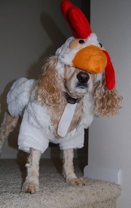 Chicken Foo