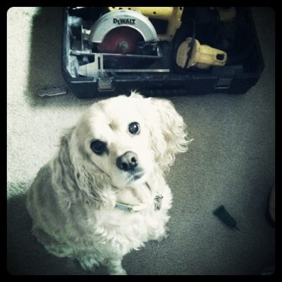 Fur Baby Fridays: Fun with power tools…