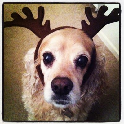 Furbaby Friday….Dear Santa