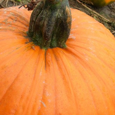 How to Roast a Pumpkin for Baking….