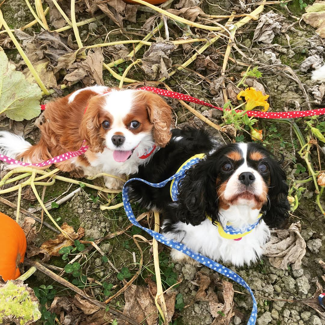 holly-pumpkin-patch