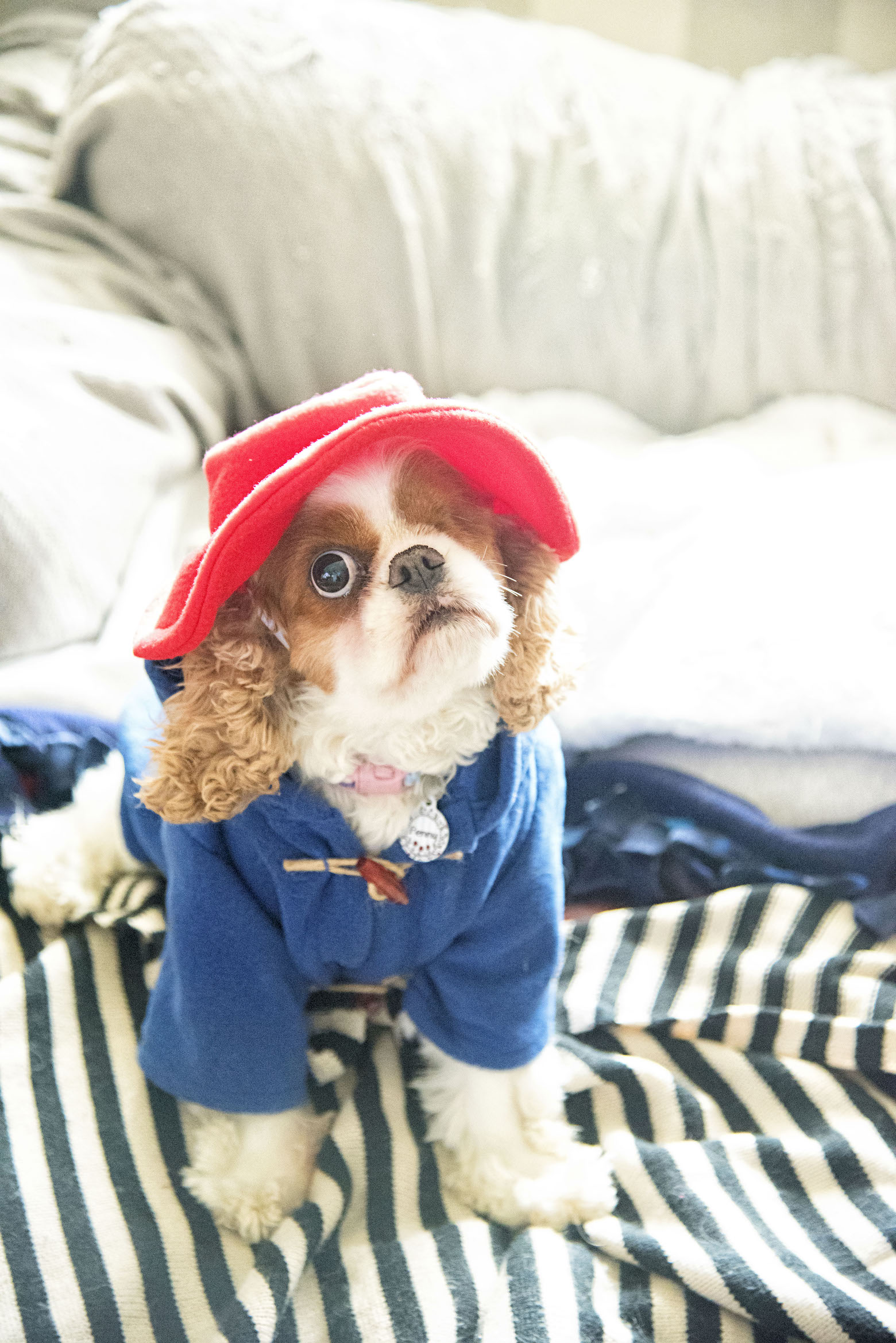 Penny as Paddington
